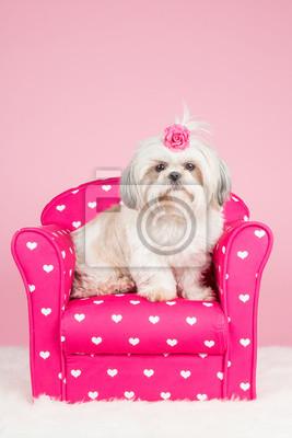 Papiers peints Mignon shih-tzu chien assis sur une chaise rose, portant un arc rose à un fond rose