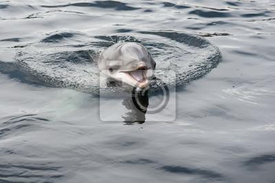 Mignon, sourire, dauphin, eau