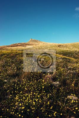 Papiers peints Montagne fleuri au printemps