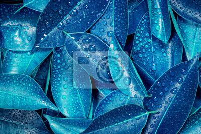 Papiers peints Mouillé, frais, tropical, bleu, feuilles, fond