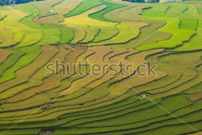 Papiers peints MuCangChai,Terraced rice field in rice season in Mu Cang Chai, Vietnam