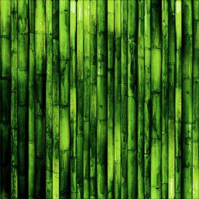 Papiers peints mur de bambou