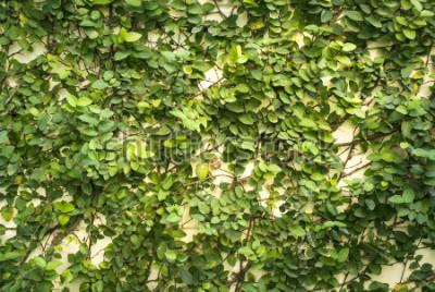 Papiers peints Mur de feuilles vertes pour le fond