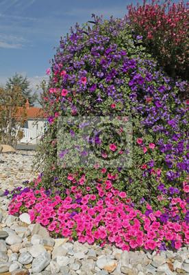 Mur Vegetal De Plectranthus Scaevola Et Surfinia Papier Peint