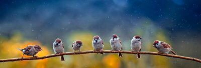 Papiers peints natural panoramic photo with little funny birds and Chicks sitting on a branch in summer garden in the rain