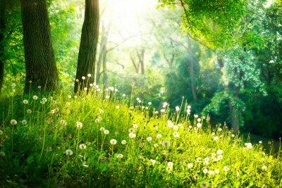 Papiers peints Nature Printemps. Beau paysage. L'herbe verte et les arbres