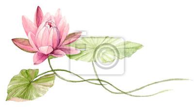 Image fleur de lotus dessin - Nenuphar dessin ...