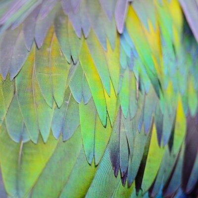 Papiers peints Nicobar Pigeon plume