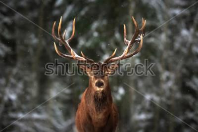Papiers peints Noble deer male in winter snow forest.