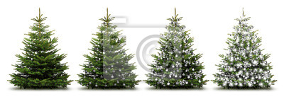 Noël Argent Fir Trees