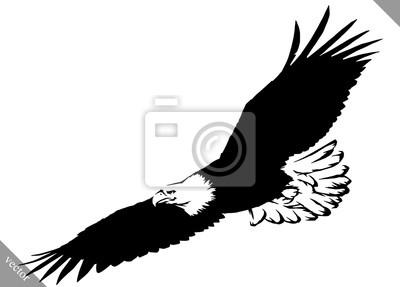 Papiers Peints Noir Blanc Peinture Dessiner Aigle Oiseau Vecteur Illustration