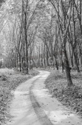 Papiers peints Noir et blanc du chemin vers la forêt