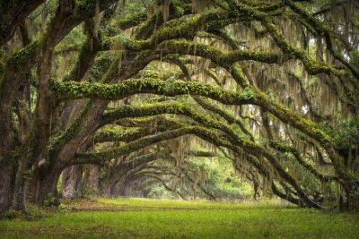 Papiers peints Oaks Avenue Charleston SC plantation Live Oak forêt des arbres