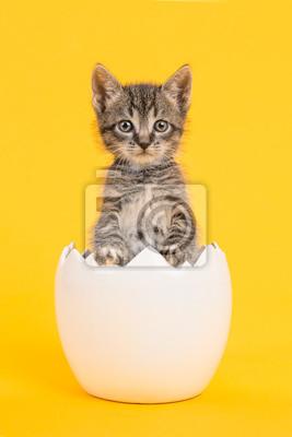 Oeuf jaune chaton