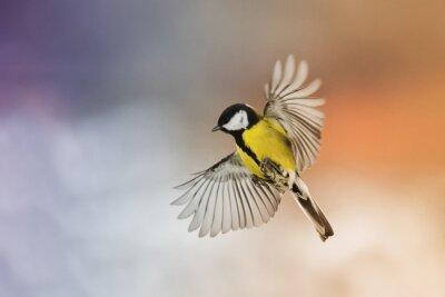 Papiers peints Oiseau mouche oiseau étirer vos ailes dans le ciel au coucher du soleil