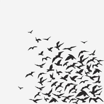 oiseaux fond