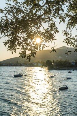 Papiers peints Oliviers, mer, Coucher soleil