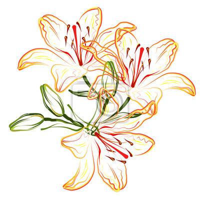 Papiers Peints Orange Lis Main Dessin Stylisé Couleur Vecteur Brosse
