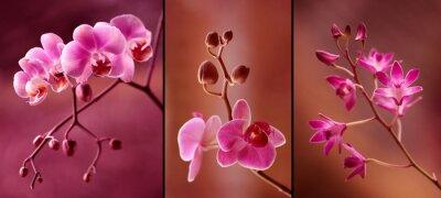 Papiers peints Orchidea Tryptyk w fioletach