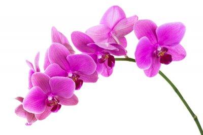 Papiers peints Orchidée