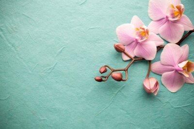 Papiers peints Orchidée.