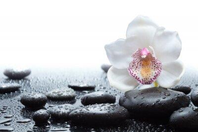Papiers peints orchidée blanche et des pierres noires humides