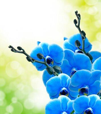 Papiers peints Orchidée, fleur, fin, haut