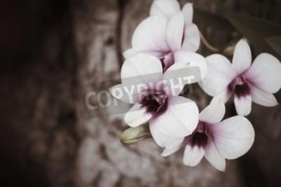 Papiers peints Orchidées anciennes
