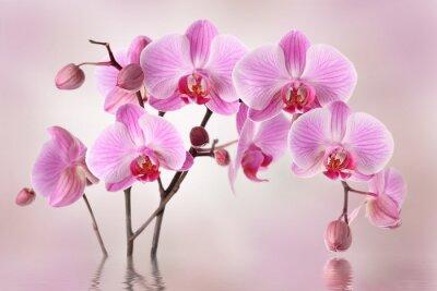 Papiers peints Orchidées roses conception fleur de fond