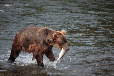 Papiers peints Ours de pêche