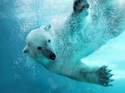 Papiers peints Ours polaire attaque sous-marine