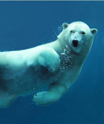 Papiers peints Ours polaire sous-marine close-up