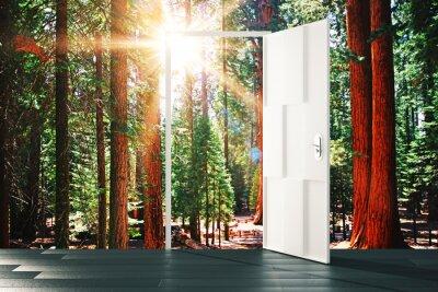 Papiers peints Ouvert, porte, ensoleillé, forêt, concept