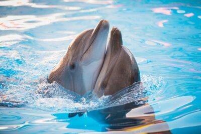 Papiers peints paire de dauphins dansant dans l'eau
