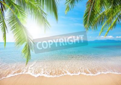 Papiers peints Palm et plage tropicale