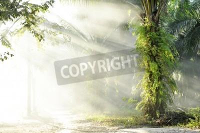 Papiers peints Palm Fog Light Farm Day Outdoor