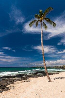 Papiers peints Palmier à la noix de coco dans une plage hawaïenne, grande île