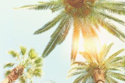 Papiers peints Palmier et soleil