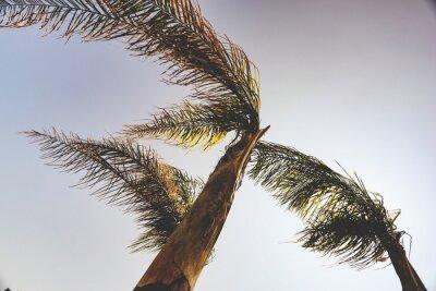 Papiers peints Palmiers