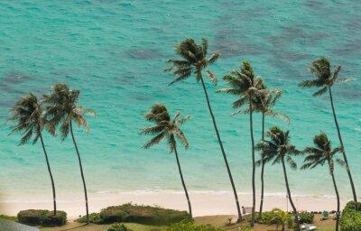 Papiers peints Palmiers à la plage de Waimanalo, Hawaï