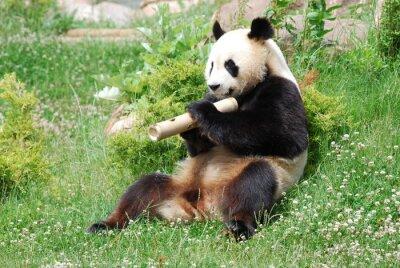 Papiers peints panda 1
