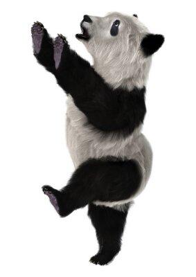 Papiers peints Panda Ourson