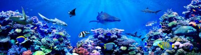 Papiers peints Panorama background of beautiful coral reef with marine tropical fish. Whale shark, Hammerhead shark, Zebra shark and sea turtle visited here