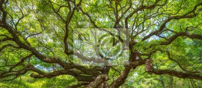 Papiers peints Panorama, branches, ange, chêne, arbre