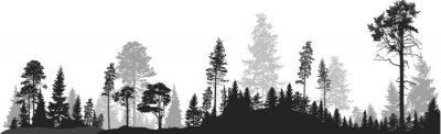 Papiers peints panorama de haute forêt de sapins gris sur blanc