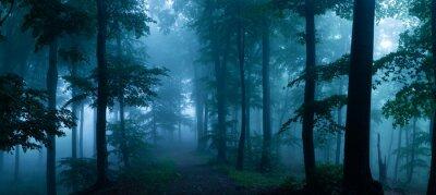 Papiers peints Panorama de la forêt brumeuse. Conte de fées effrayant bois regardant dans une journée brumeuse. Matin froid et brumeux dans la forêt de l'horreur