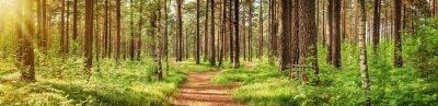 Papiers peints Panorama de la forêt de pins en été. Chemin dans le parc