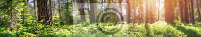 Papiers peints Panorama des forêts de pins et de sapins au printemps. Chemin dans le parc