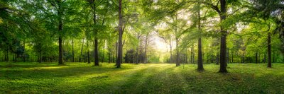 Papiers peints Panoramic view of a forest with sunlight shining through the trees