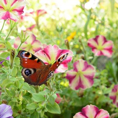 Papiers peints papillon 186